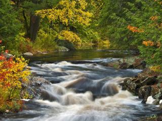 обои Быстpый ручей в осеннем лесу, у разноцветных кустов фото