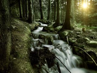 обои Быстрый ручей, в весеннем сосновом лесу фото