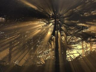 обои Вечерние лучи в кронах деревьев фото