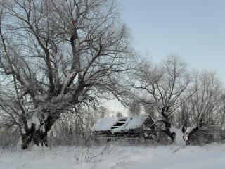 обои Заброшенный домик и деревья зимой фото