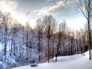 обои Заснеженный лес и столик фото
