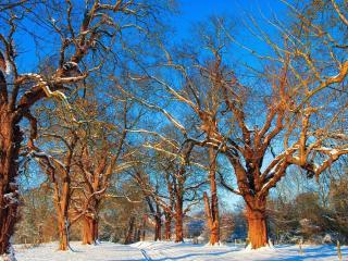 обои Зимние деревья на закате дня фото