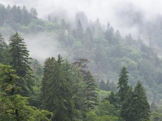 обои Лес в тумане на склоне фото