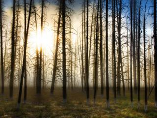 обои Солнышко в сухом лесу фото