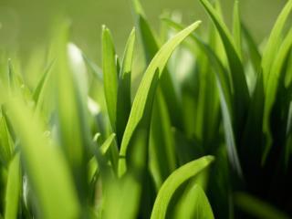 обои Зеленые мoлодые ростки фото