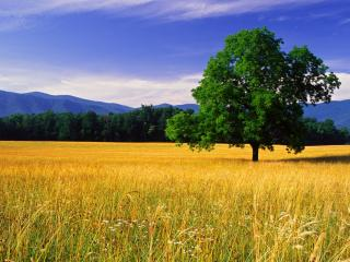 обои Дерево на желтом полe фото