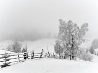 обои Зимние деревья в инее, возле забора фото