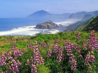 обои Дикие цветы на берегу возле моря фото
