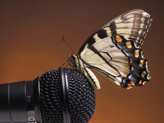 обои Бабочка сидит на микрофоне фото