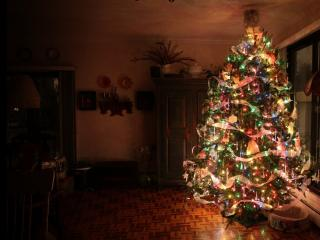 обои Украшена елка в комнате фото