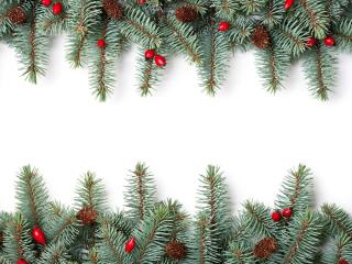 обои Ветки елки фото