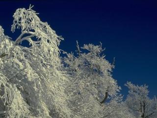 обои Вечерний иней на зимних деревьях фото