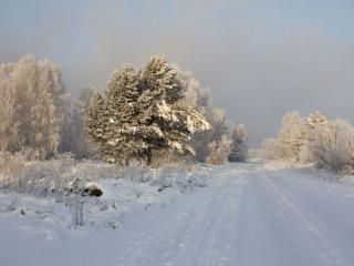 обои Дорога в зимний туман фото