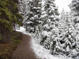 обои Зима и лето фото