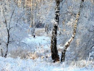 обои Зимние кружева фото