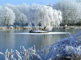 обои Зимний пруд с островком посередине фото