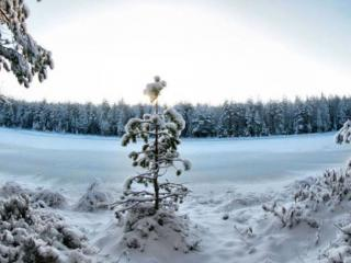 обои Маленькой ёлочке холодно зимой фото