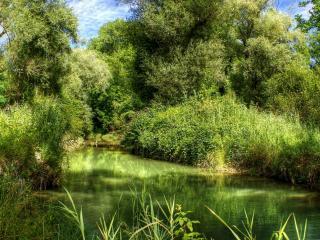 обои Летняя речка среди густой растительности фото