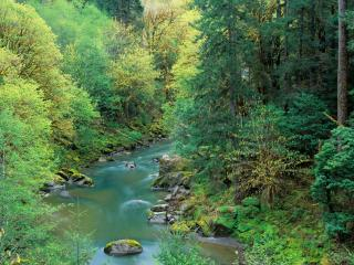обои Ручей в густом весеннем лесу фото