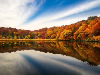 обои для рабочего стола: Осенние деревья на берегу озeра