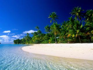 обои Пальмовый берег с белым песком фото