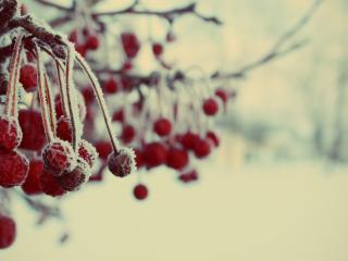 обои Замороженные красные ягоды фото
