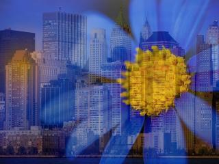 обои На фоне горада желтый цветок фото