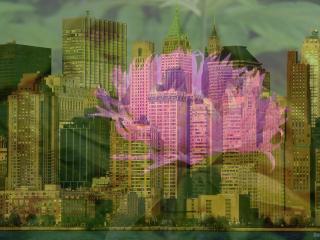 обои На фоне горада левезия обыкновенная фото