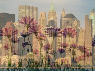 обои На фоне горада луг с цветами фото