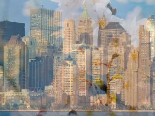 обои На фоне горада нежные весение цветы фото
