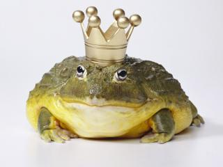 обои Царевна лягушка фото