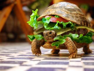 обои Черепаха гамбургер фото