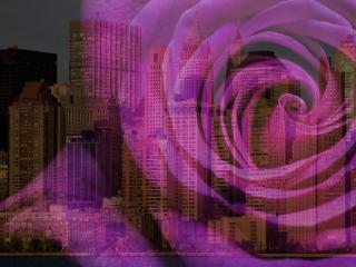 обои На фоне горада офигенная роза фото