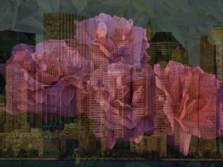 обои На фоне горада серенивые розы фото