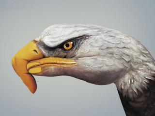 обои Рука орел фото