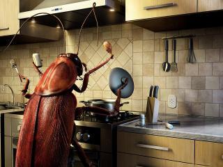 обои Таракан на кухне фото