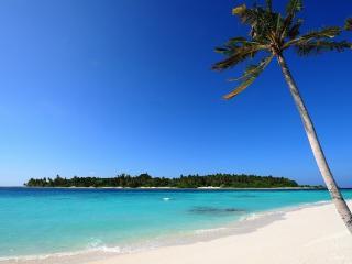 обои Одинокая пальма на берегу океанa фото
