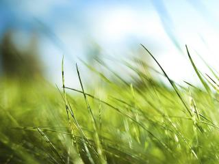 обои Зеленые лепестки травы фото