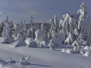 обои В снежном плену фото