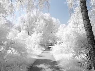 обои Белая нежность природы фото