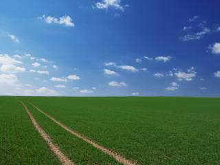 обои Колея через поле с молодыми посевами фото