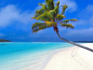 обои Одинокая пальма на берегу с белым песком фото