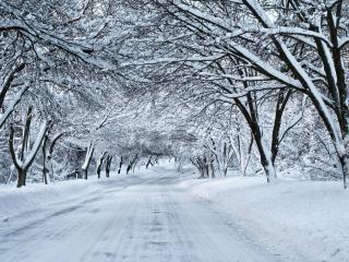 обои Расчищенная дорога зимой фото