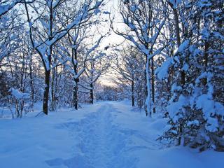 обои Тропинка в лесу с глубоким снегом фото