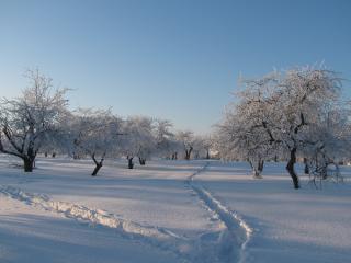 обои Тропинки в зимнем саду фото
