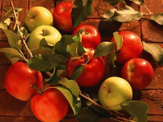 обои Осенние яблоки на кирпичах фото