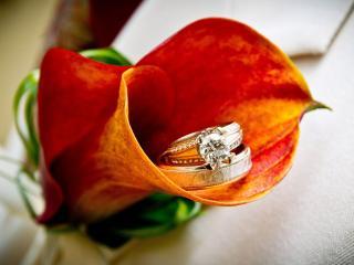 обои Два кольца в цветке фото