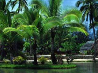 обои Пальмы с яркими листьями фото