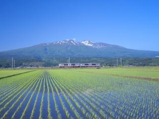 обои Ровные ряды на рисовом поле фото