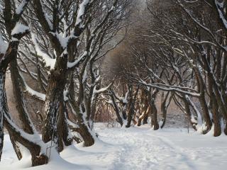 обои Снежная тропа через лес фото